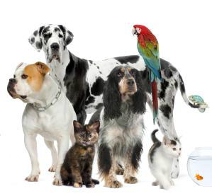 Animali domestici di tutte le specie e cuccioli da for Rettili domestici