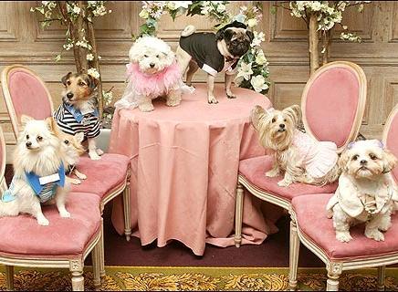 Vendita cibo per cani royal canin cibo per cani e for Articoli per cani