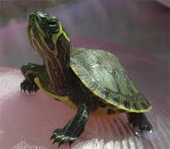 Cosa non fare con le tartarughe for Vitamina a per tartarughe