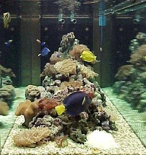 L 39 acquario d 39 acqua dolce e marina le differenze for Acqua per acquario