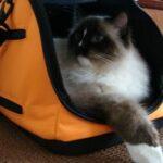 Sleepypod-Air trasportino gatto