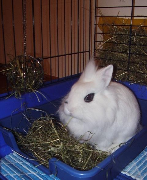 Far fare i bisogni nella lettiera - Lettiera coniglio nano ...