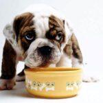 alimentazione cani
