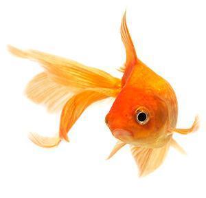 Tutti i tipi di acquario vendita acquario accessori e pesci for Vendita pesci rossi on line