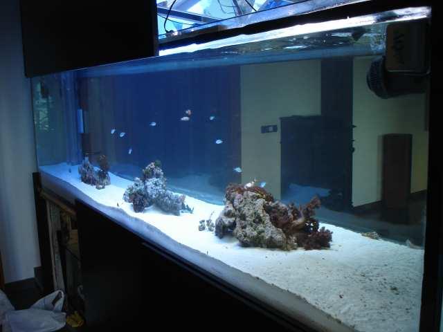 Lampade per acquario for Acquario per pesci
