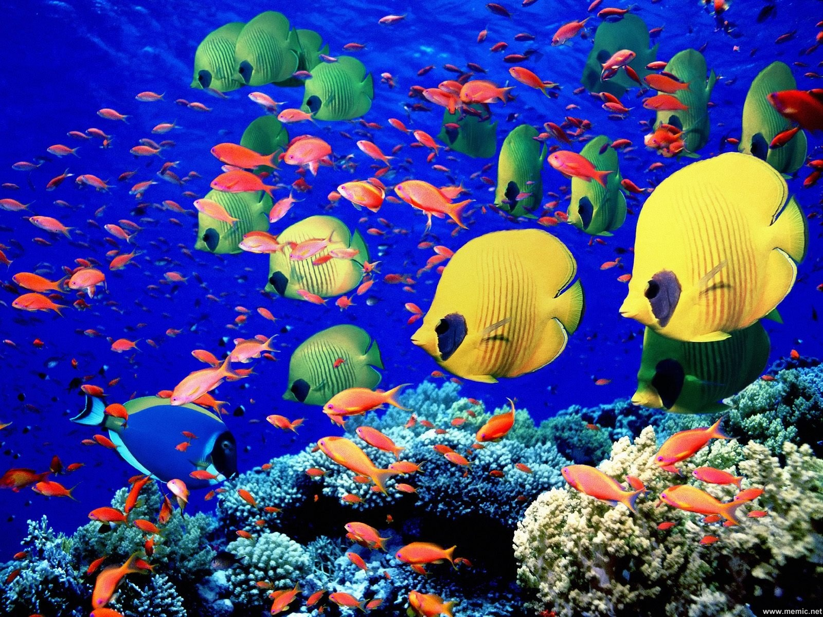 Cibo per pesci for Cibo per pesci tropicali