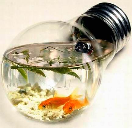 Vendita acquario accessori acquario acquario tropicale for Acquario per pesci