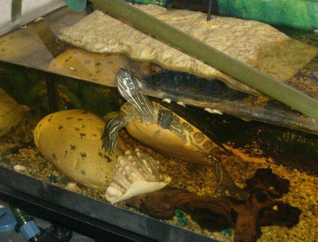 Allestire in modo corretto l 39 acquaterrario per le tartarughe for Lampada per tartarughe