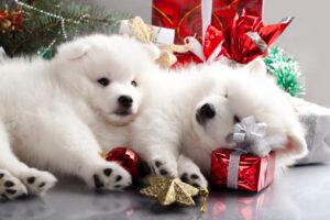 Regali di Natale cane