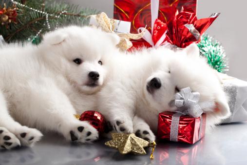 I regali di Natale per i cani