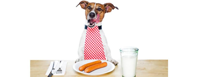Come scegliere l'alimentazione del cane